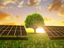 Solar energy panels and tree on meadow at sunset. Royalty Free Stock Images