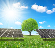 Solar energy panels and tree on meadow. Royalty Free Stock Photos
