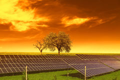 Solar energy panels before trees and sunset sky Stock Photos