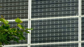 Solar energy, photosynthesis and wind concept of natural energies. Leaves and branches of a tree moved by the wind, on a background of solar panels stock video footage