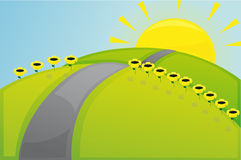 Solar field. Sunflowers, and in the middle of the road Royalty Free Stock Photo