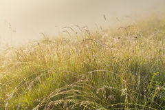Solar field with thick grass Royalty Free Stock Photography