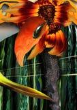 Solar flower. Royalty Free Stock Photography