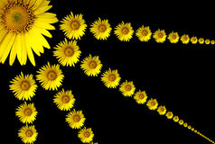Solar flower. Royalty Free Stock Images
