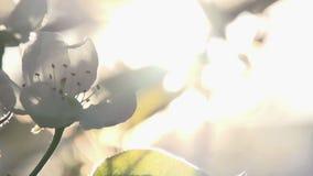 Solar Flower stock footage
