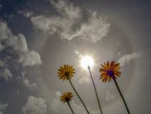 A solar halo brights in the morning sky royalty free stock photo