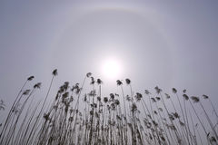 Solar halo Stock Photography