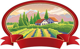 Solar landscape with vineyard Stock Photography