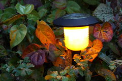 Solar light. Energy saving solar light in a garden Royalty Free Stock Photos