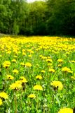 Solar meadow Royalty Free Stock Image