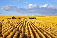 Solar midday on fields of Montana Stock Images