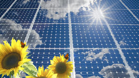 Solar Panel And Sunflower. Stock Photography