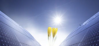 Solar panel and crocus Royalty Free Stock Image