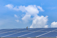 Solar panel ecological  power Royalty Free Stock Photography