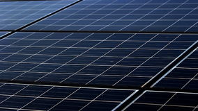 Solar panel plant ecology power