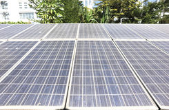 Solar panel plants Royalty Free Stock Image