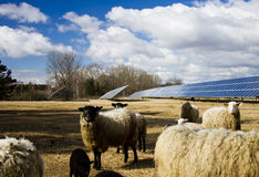 Solar panel and sheep Stock Images