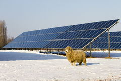 Solar panel and Sheep Royalty Free Stock Images