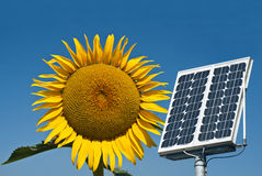 Solar panel and sunflower, the future energy. Sunflower and solar panel, the future energy of the world Royalty Free Stock Photos
