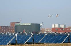 Solar panels and ducks Royalty Free Stock Image
