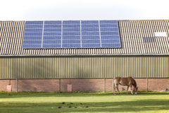 Solar panels and grazing horse Stock Photos