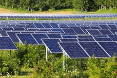 Solar Panels In The Green Stock Photo