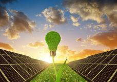 Solar panels with lightbulb on plant Stock Photos