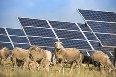 Solar panels with sheep royalty free stock images