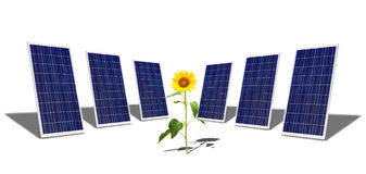 Solar panels and sunflower Royalty Free Stock Images