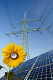 Solar panels, sunflower, utility pole with wires Stock Photos