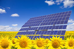 Solar panels on sunflowers field. Against blue sky. Clean energy concept Stock Image