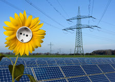 Solar park, sunflower with socket and power line Royalty Free Stock Photo