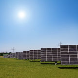 Solar plants in the rows Royalty Free Stock Images