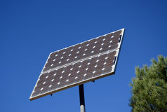 Solar plate and  pine-tree Stock Photo