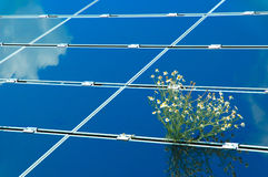 Solar power plant with chamomile Royalty Free Stock Images