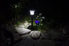 Solar-Powered LED Light Illuminating Exterior Plantings. A single solar-powered LED light illuminating some exterior plants, including purple and white pansies Royalty Free Stock Photos