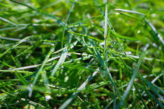 Solar raindrops on the grass Royalty Free Stock Photos