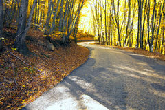 The solar road in the mountain wood Stock Images