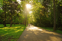 Solar road in a park Royalty Free Stock Photography