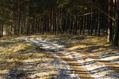 Solar Road To Pine Wood Stock Image