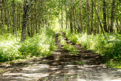 Solar road to wood in the summer Royalty Free Stock Image