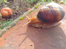 Solar snail with shadow royalty free stock images
