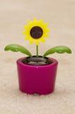 Solar Sunflower Royalty Free Stock Photos