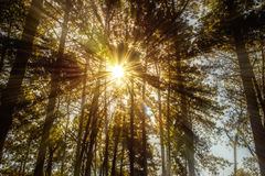 Solar survive the trees Stock Image