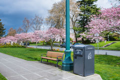 Solar Trash Compactor in Urban Park. Solar trash compactor in residential park with park bench and cherry trees in bloom. Copy space royalty free stock photo