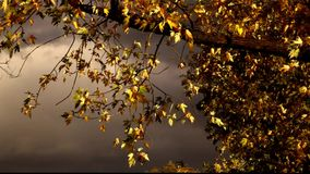 Solar tree leaves and mysterious sky. Wind, solar tree leaves and mysterious sky stock video