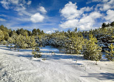 Solar winter day Stock Photography