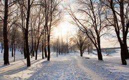 Solar winter landscape Stock Image