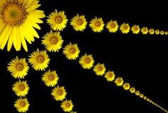 Solarblume. vektor abbildung