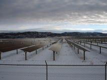 Solarenergie-Industrie stockfotos